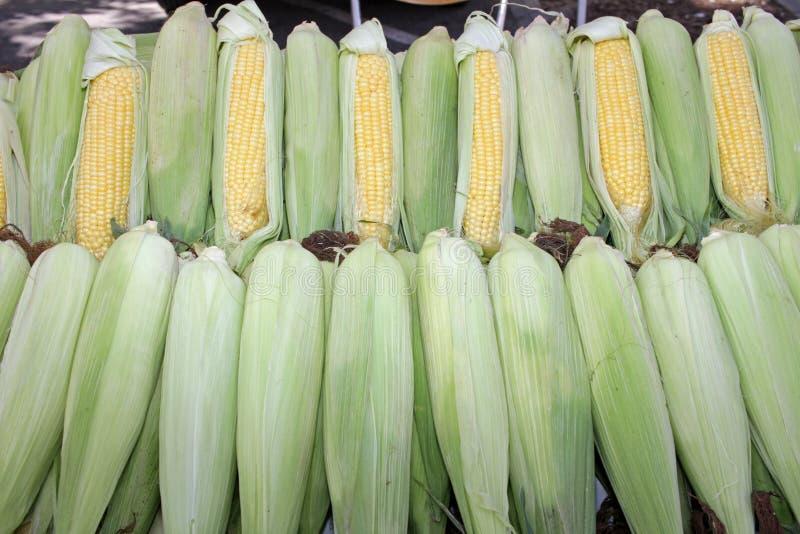 与叶子的新鲜的玉米棒子 有机甜玉米 ?? 充分的护板照片 菜背景纹理 饮食和健康吃 图库摄影