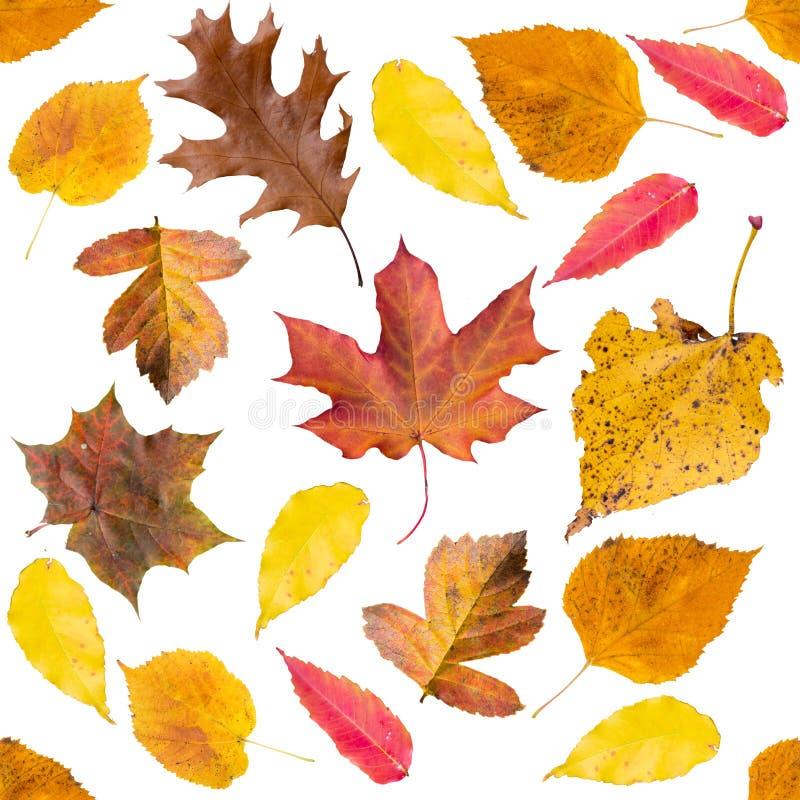 与叶子的无缝的秋天样式在白色背景 免版税库存图片