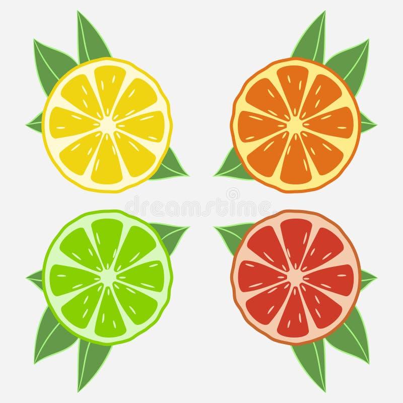 与叶子的柑橘水果 桔子、石灰、柠檬和葡萄柚 向量 向量例证
