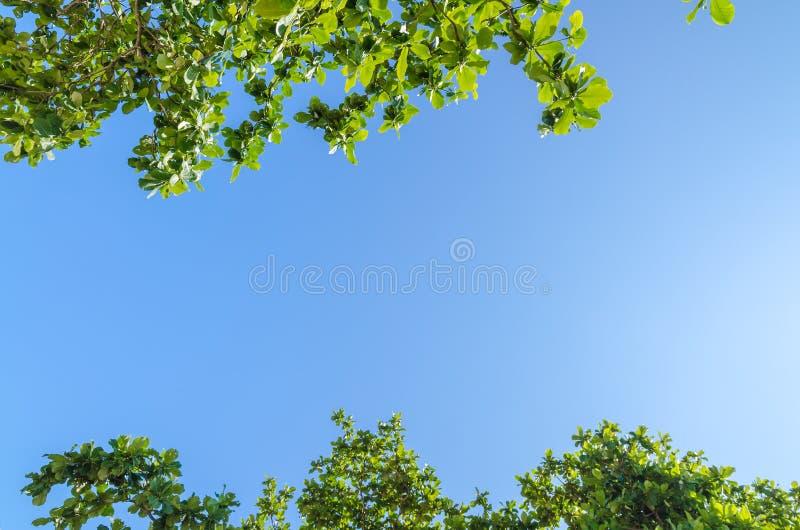 与叶子的树枝反对蓝天 免版税库存照片