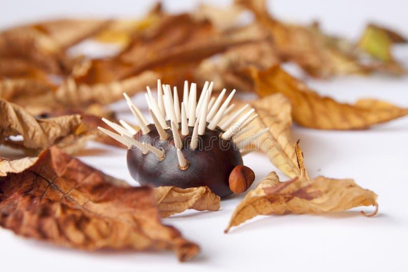 与叶子的栗子hedgehod 库存照片