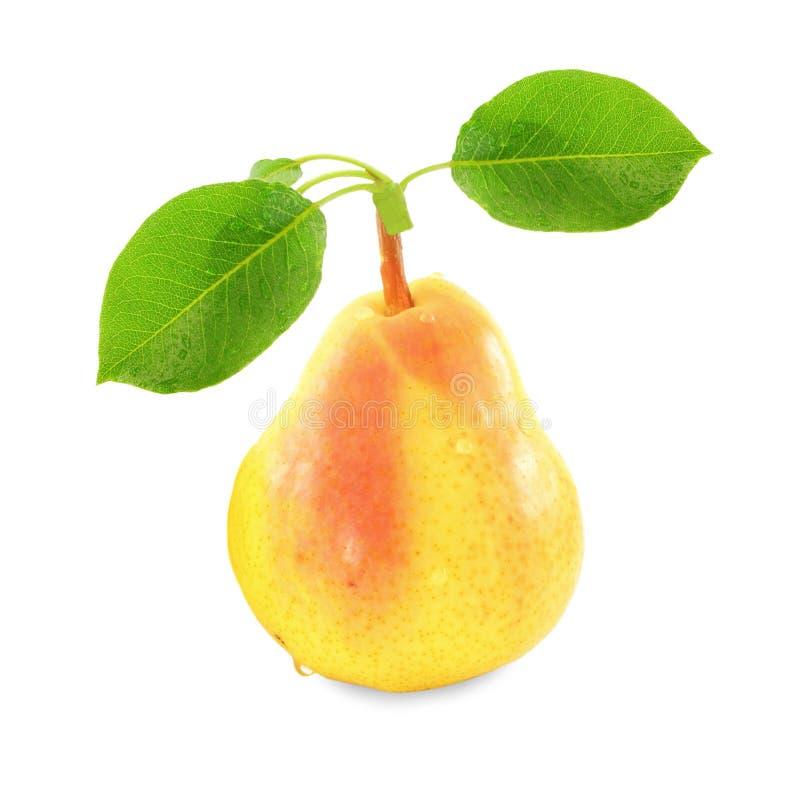 与叶子的梨果子在纯净的白色背景中 库存照片