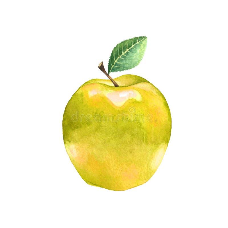 与叶子的水彩黄色苹果 库存图片