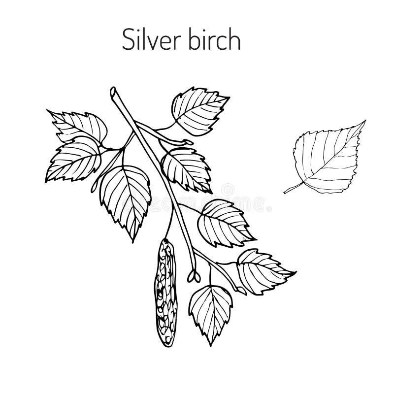 与叶子的白桦树分支 库存例证