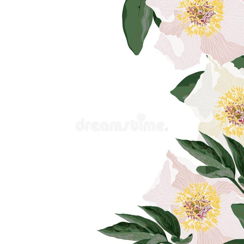 与叶子的白色和桃红色牡丹花 春天装饰花束 向量例证
