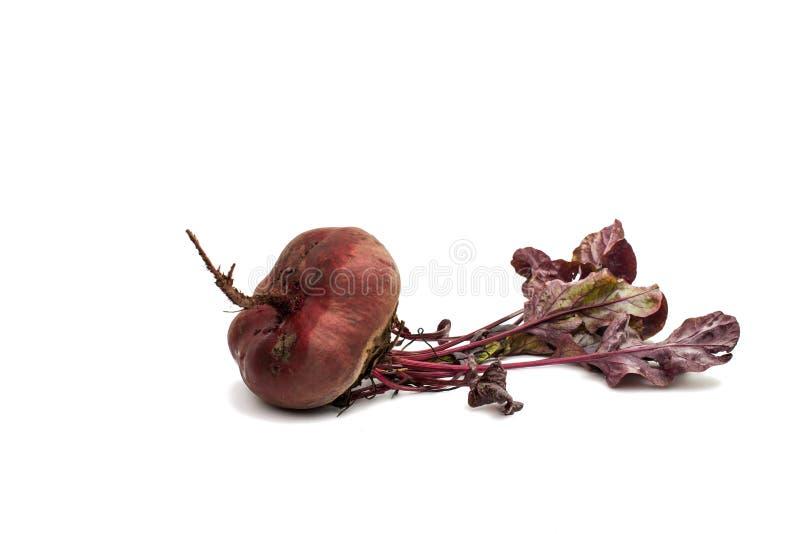 与叶子的红色甜菜在白色 图库摄影