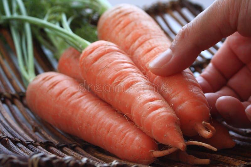 与叶子的红萝卜 库存图片