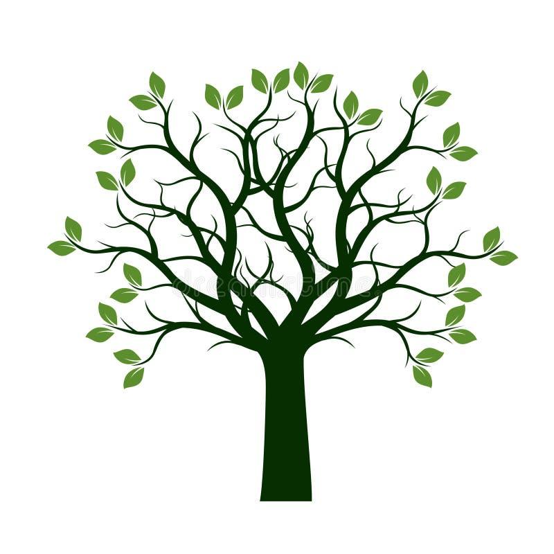 与叶子的绿色春天树 也corel凹道例证向量.图片