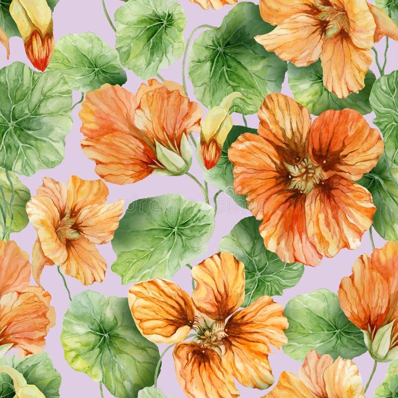 与叶子的美好的橙色金莲花花鼻子扭转者在淡紫色背景 无缝花卉的模式 多孔黏土更正高绘画photoshop非常质量扫描水彩 向量例证