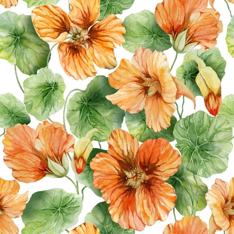 与叶子的美好的橙色金莲花花鼻子扭转者在白色背景 无缝花卉的模式 多孔黏土更正高绘画photoshop非常质量扫描水彩 向量例证