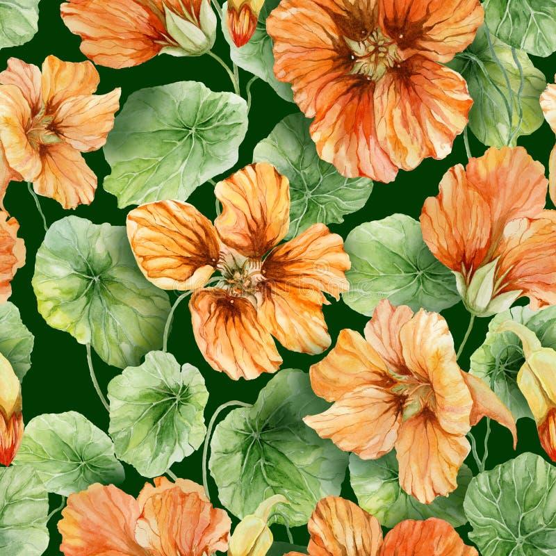 与叶子的美好的橙色金莲花花鼻子扭转者在绿色背景 无缝花卉的模式 多孔黏土更正高绘画photoshop非常质量扫描水彩 向量例证