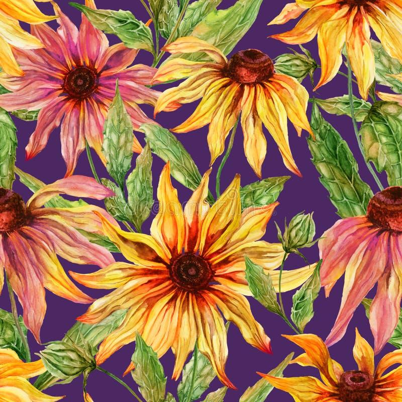 与叶子的美好的海胆亚目花coneflower在紫色背景 无缝花卉的模式 多孔黏土更正高绘画photoshop非常质量扫描水彩 库存例证