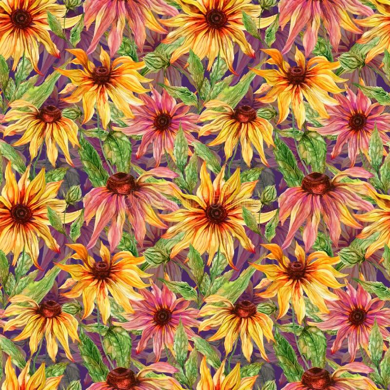 与叶子的美好的海胆亚目花coneflower在紫色背景 无缝花卉的模式 多孔黏土更正高绘画photoshop非常质量扫描水彩 皇族释放例证