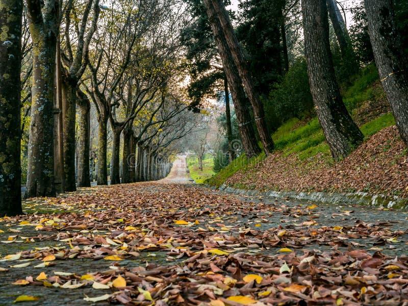 与叶子的美好的秋天颜色 免版税库存照片