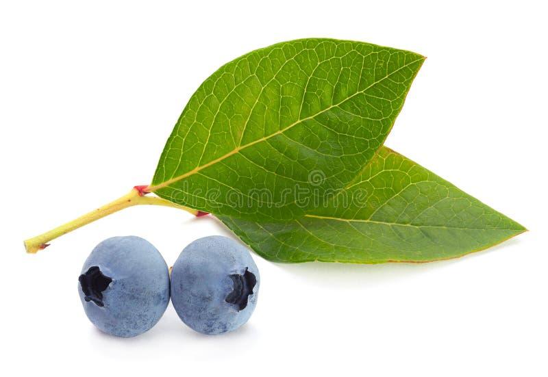 与叶子的蓝莓果子 免版税库存照片