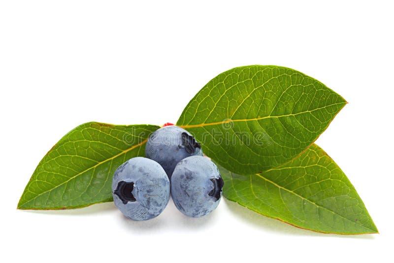 与叶子的蓝莓果子 免版税库存图片
