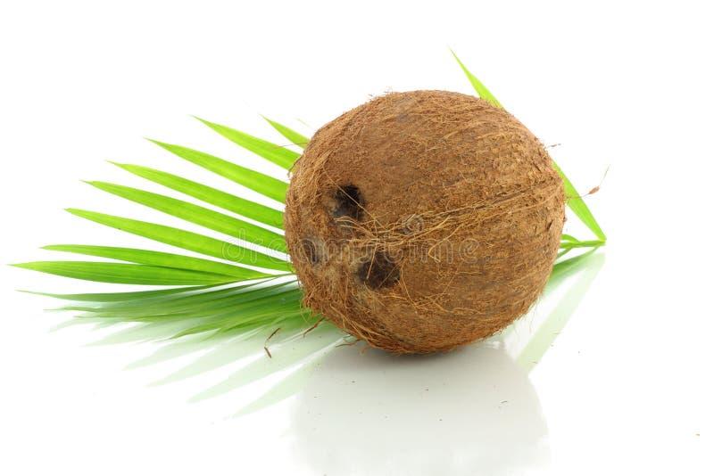 与叶子的整个椰子 库存图片