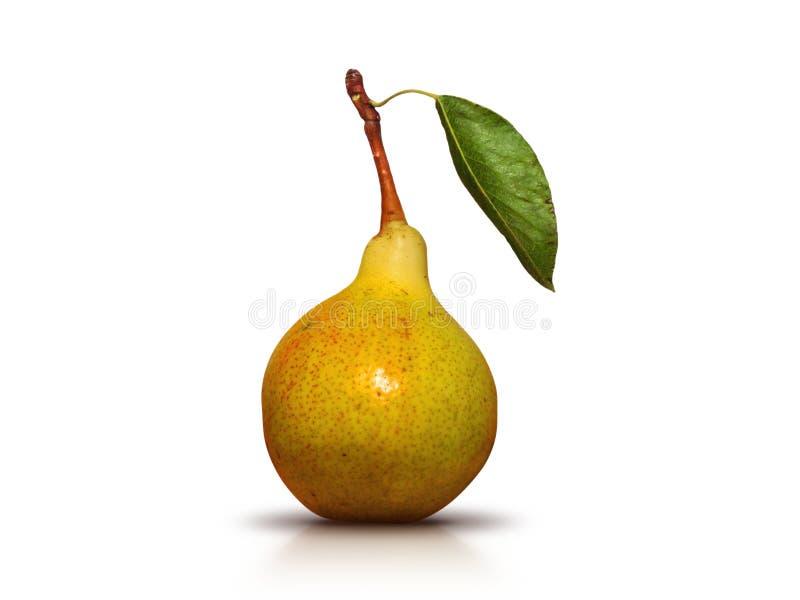 与叶子的水多和成熟绿色梨在茎-被隔绝的照片 免版税图库摄影
