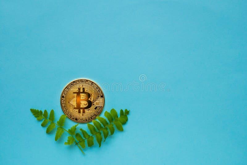 与叶子的Bitcoins在蓝色背景 免版税库存图片