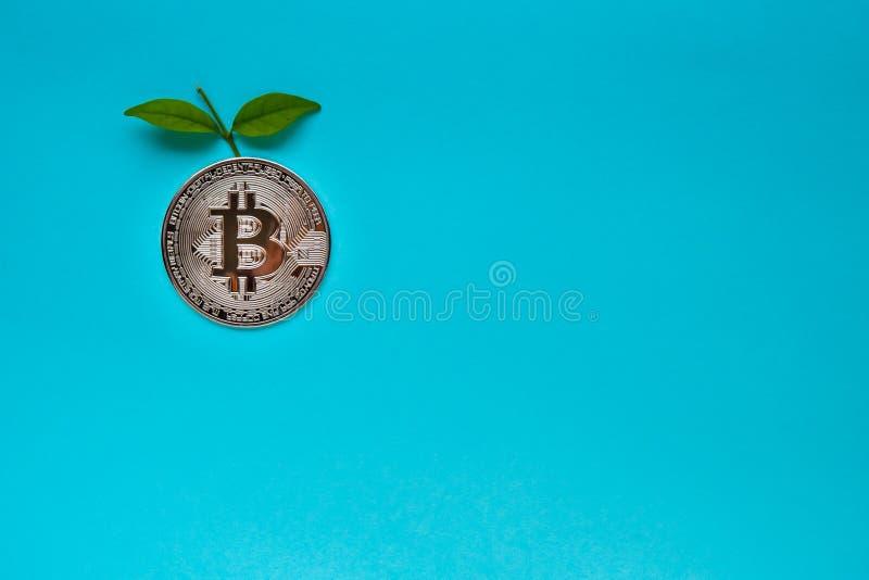 与叶子的Bitcoins在蓝色背景 库存图片