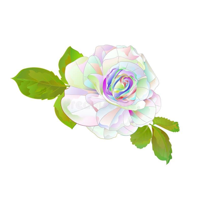 与叶子自然葡萄酒的多色的玫瑰简单的词根在编辑可能一个白色背景传染媒介的例证 库存例证