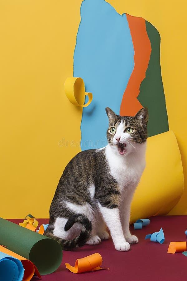 与吃惊的面孔的猫在与被撕毁的纸的五颜六色的纸背景 免版税库存图片