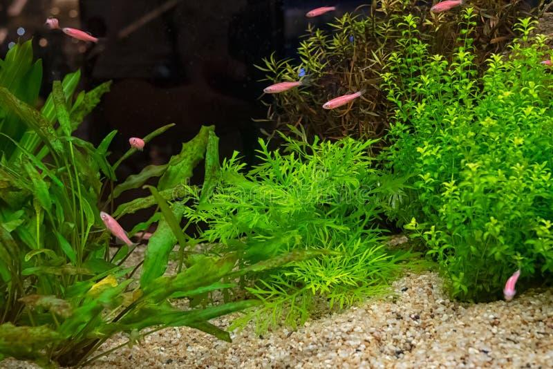 与各种各样的植物的水族馆坦克 免版税库存图片