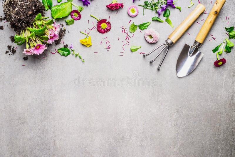 与各种各样的花植物和庭院工具的从事园艺的边界在灰色石背景,顶视图 图库摄影