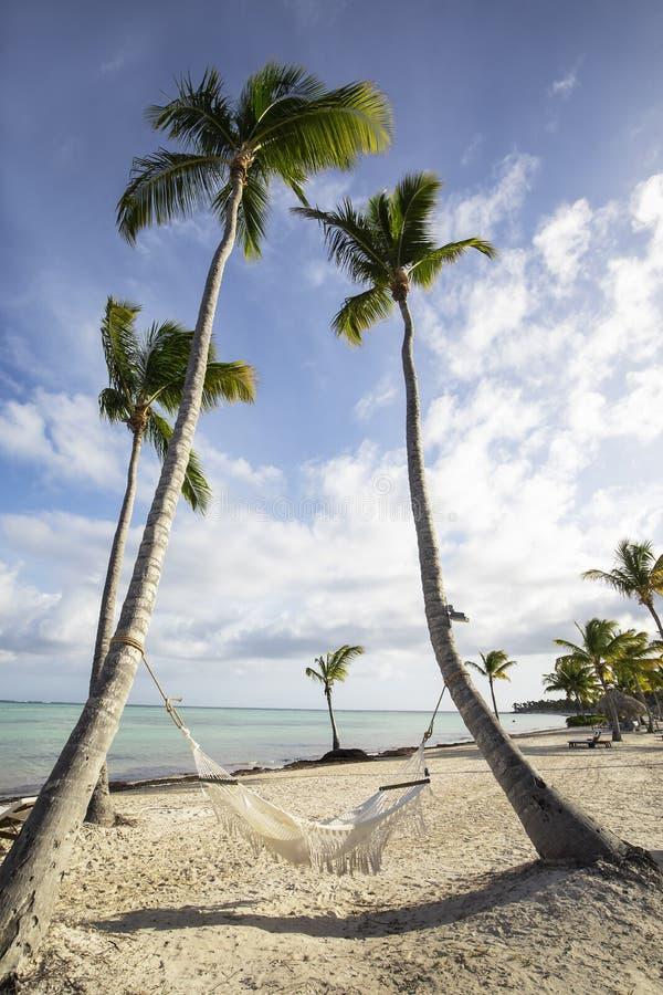 与吊床的棕榈树在海滩在反对天空蔚蓝的加勒比与白色云彩 库存图片