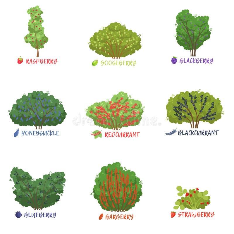 与名字的不同的庭院莓果灌木排序设置,果树,并且莓果灌木导航例证 皇族释放例证