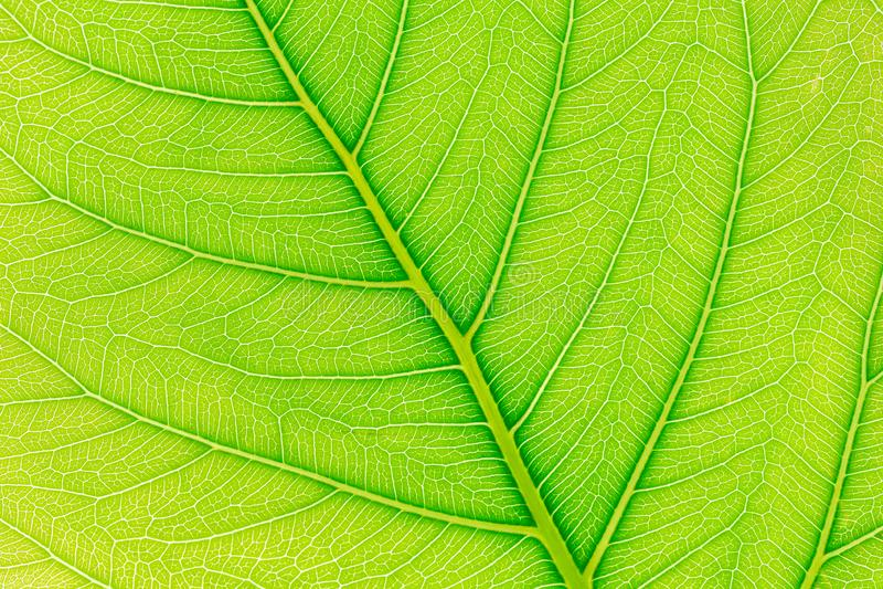 与后边光的绿色叶子样式纹理背景为网站模板、春天美景、环境和生态概念 库存图片
