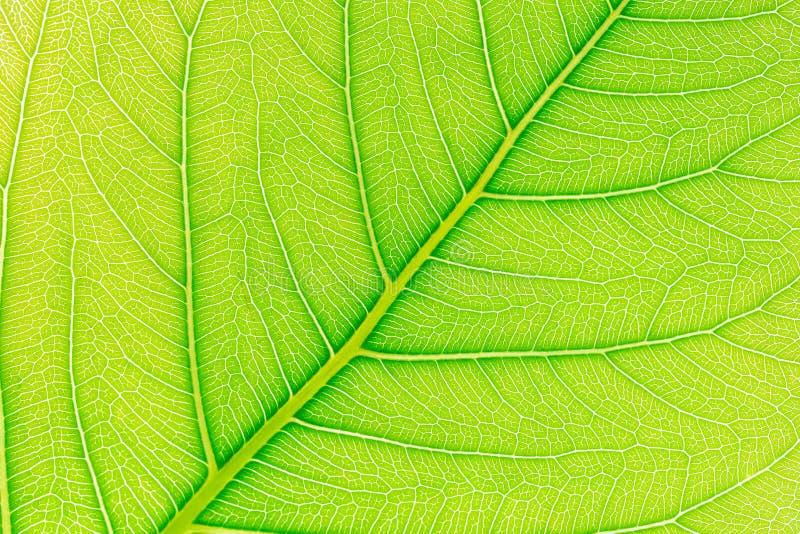 与后边光的绿色叶子样式纹理背景为网站模板、春天美景、环境和生态概念 免版税图库摄影