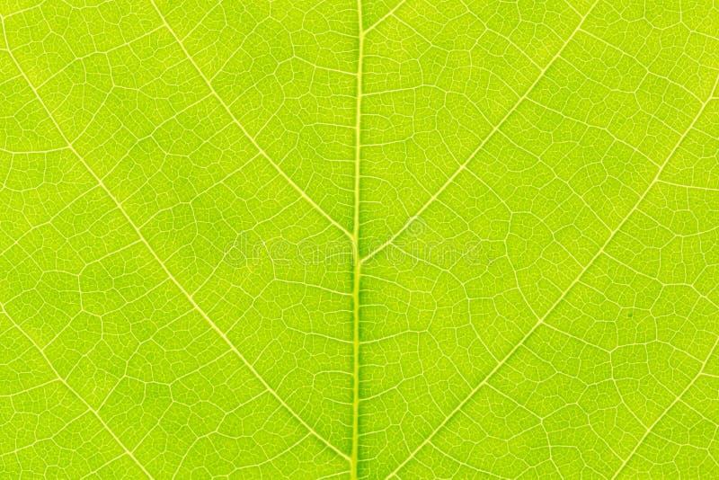 与后边光的绿色叶子样式纹理背景为网站模板、春天美景、环境和生态概念 免版税库存照片