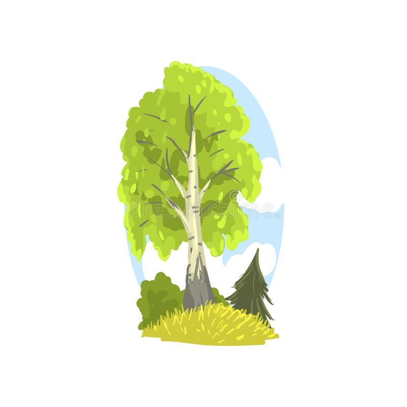 与后边桦树、冷杉和灌木的春天或夏天风景场面 与绿色叶子的落叶树 拉长的森林现有量 皇族释放例证