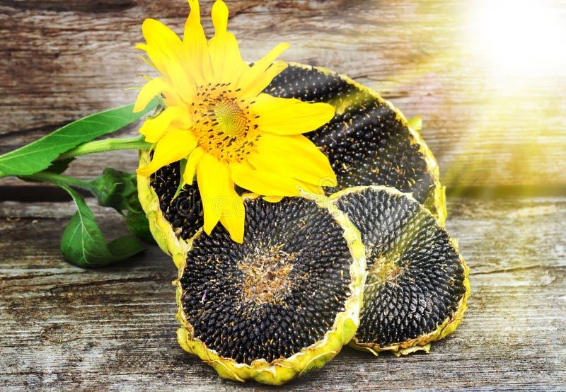 向日葵种子_与向日葵种子的向日葵在木纹理. 农场, 食物.