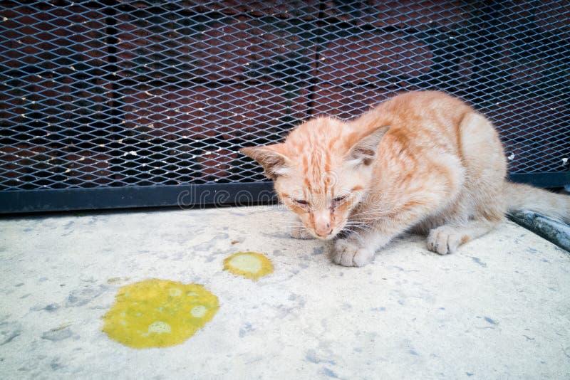 与呕吐的病的不适的宠物猫在地板上 免版税库存照片