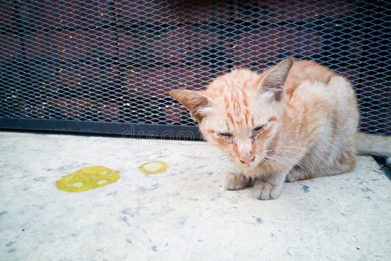 与呕吐的病的不适的宠物猫在地板上 库存照片