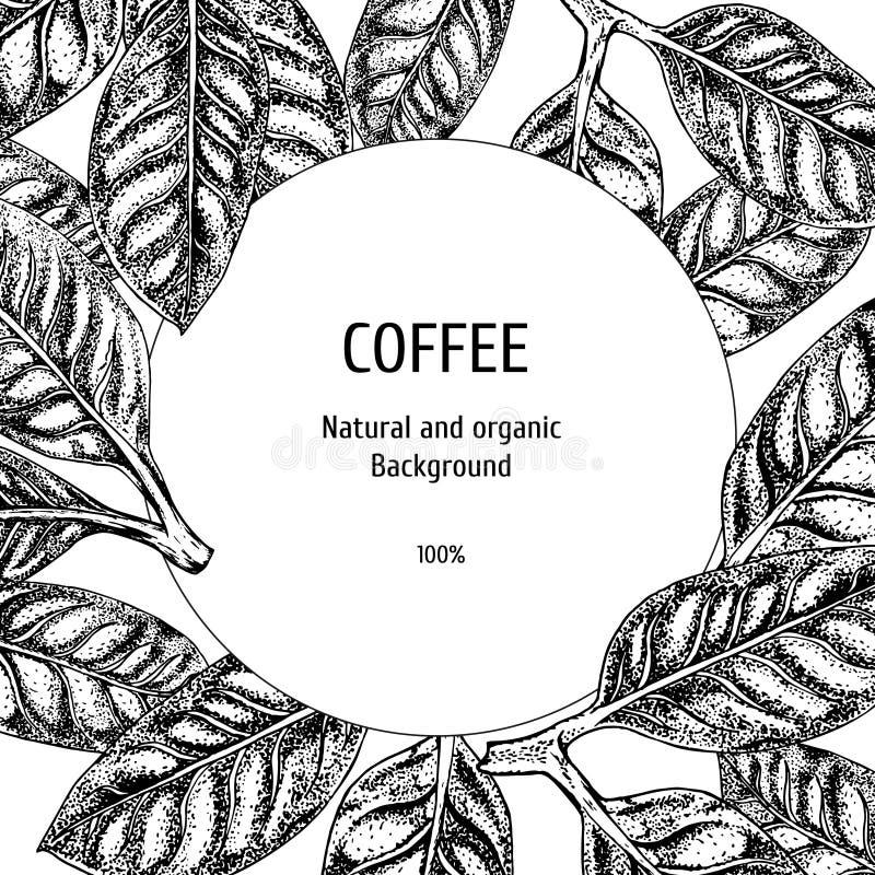 与咖啡剪影的背景 葡萄酒传染媒介背景 传染媒介手拉的叶子 包装的布局设计 皇族释放例证
