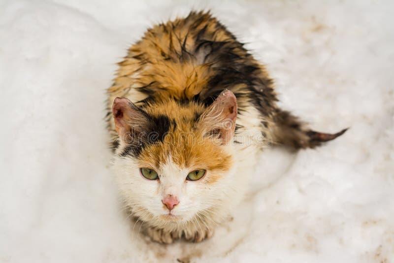 与哀伤的眼睛的一只湿无家可归的猫 免版税库存图片