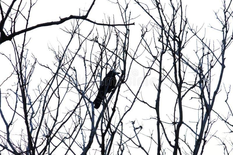与唯一掠夺的死的热带树枝坐上面 免版税图库摄影