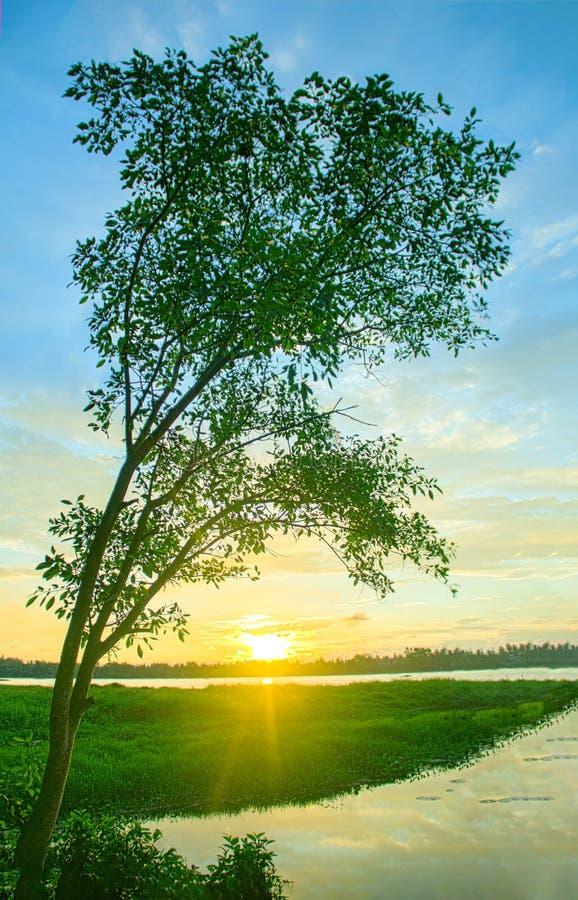 与唯一树的日落在河 免版税库存照片