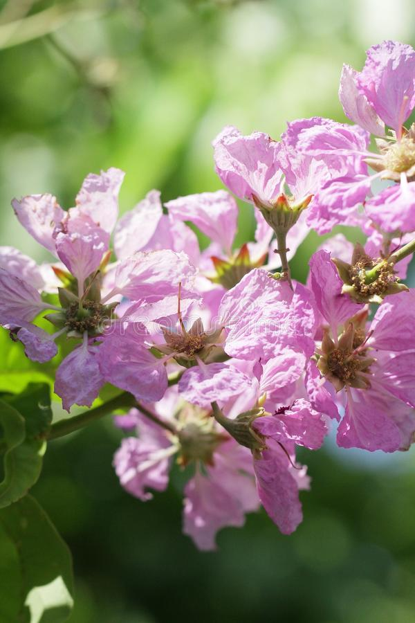 与嗅到树的嗅到的冠的紫色花的惊人的天 库存照片