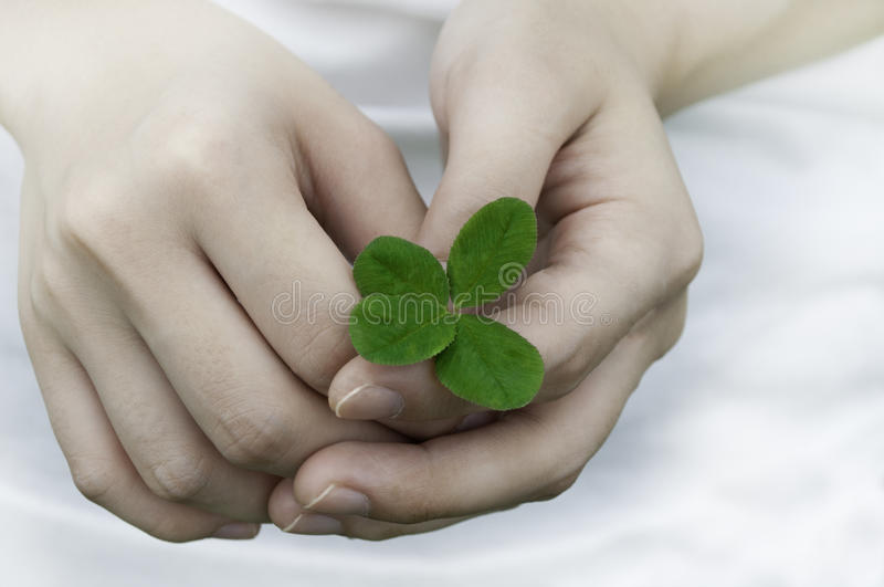 与四片叶子三叶草的同情 库存照片
