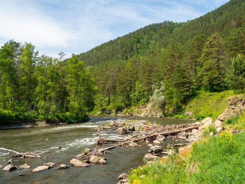 与围拢它的卡通河和山的迷人的风景在一明亮的好日子在阿尔泰 免版税库存照片