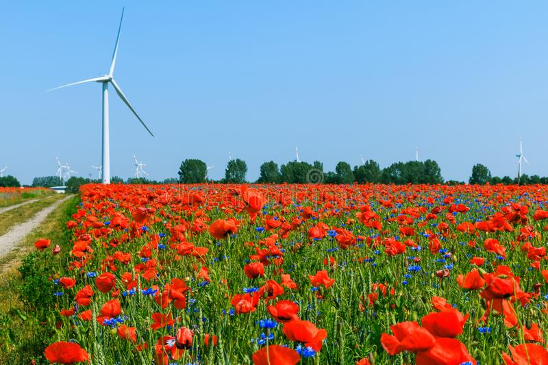 与土路和络纱机轮子的鸦片领域有天空蔚蓝的植物的 免版税图库摄影