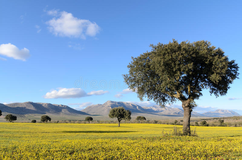 Download 与圣栎的风景在春天 库存照片. 图片 包括有 草原, 风景, 背包, 五颜六色, 草甸, 地产, 横向, 云彩 - 30335108