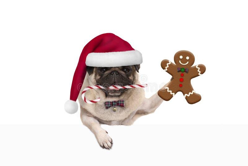 与圣诞老人帽子和棒棒糖的逗人喜爱的圣诞节哈巴狗狗,阻止姜饼人曲奇饼,垂悬在白色横幅 库存图片