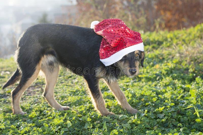 与圣诞老人帽子的逗人喜爱的混合品种狗 免版税库存图片