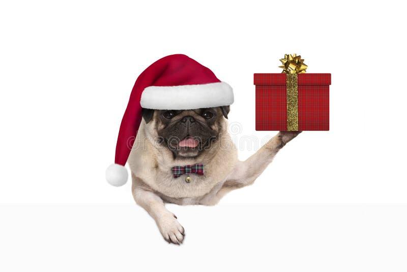 与圣诞老人帽子,阻止的逗人喜爱的圣诞节哈巴狗狗当前在礼物盒,垂悬在白色横幅 免版税库存图片