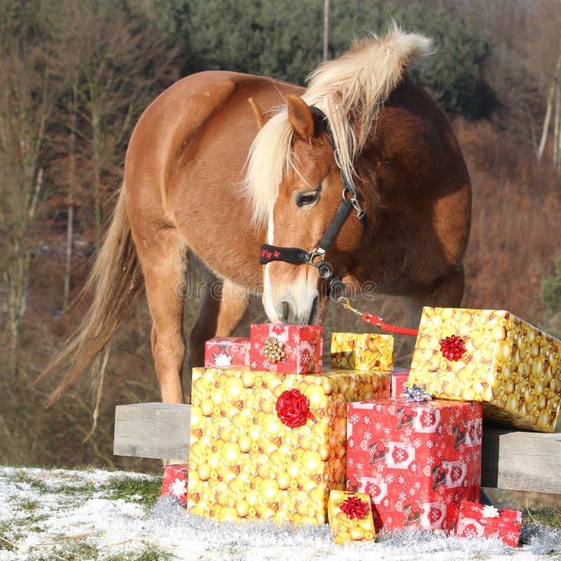 与圣诞节礼物的美丽的马 库存照片